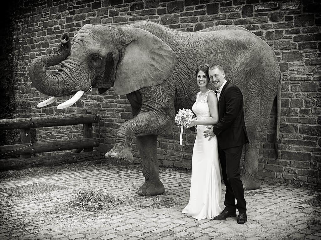 Hochzeitsfotografie im Zoo Fotostudio Hosenfeldt