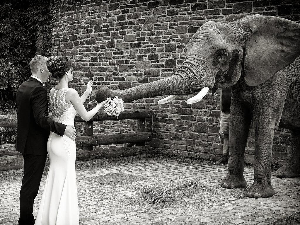 Hochzeitspaar mit Elefant Fotostudio Hosenfeldt